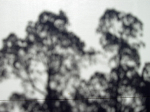 Shadow001